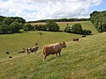Pastures, Chinnor - geograph.org.uk - 883935.jpg