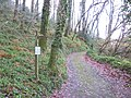 Path junction, in Bridford Wood - geograph.org.uk - 1606777.jpg