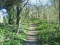 Path through the Woods - geograph.org.uk - 1234406.jpg