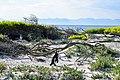 Penguins at Boulders Beach, Cape Town (22).jpg