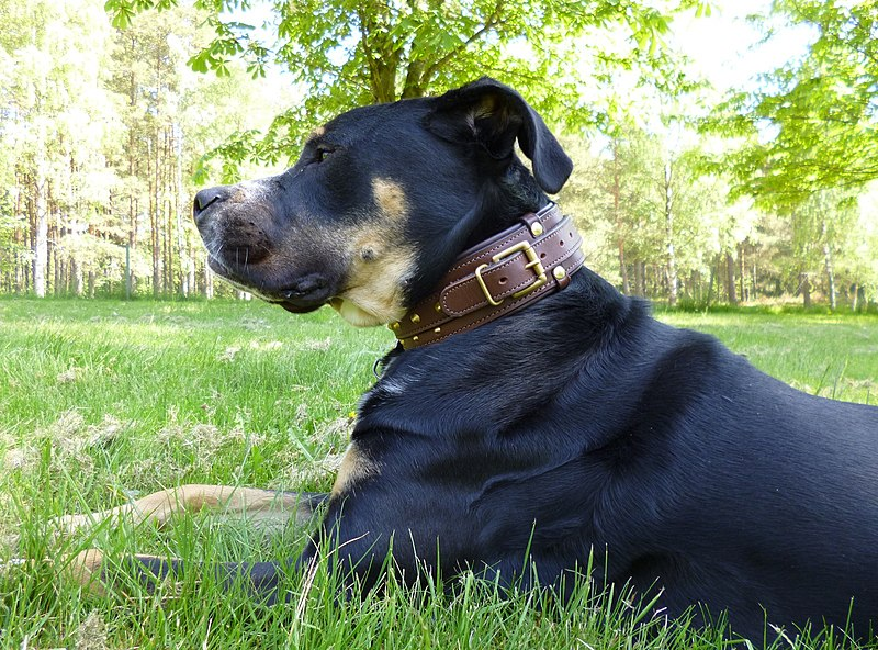 Image Result For Can A Dogo