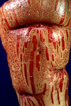Tuber colored as if bleeding blood