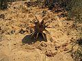 Phosphorus Shell Fired from Gaza.jpg
