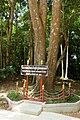 Phra That Si Surat Shorea roxburghii.jpg