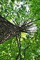 Pidhorodne-modryna-n2-15058081.jpg