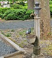 Pigeon drinking at the fountain in Vada (Livorno), after the quarantine the animals get closer and are not afraid.jpg