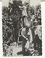 PikiWiki Israel 1492 Rehovot קטיף תפוזים.jpg
