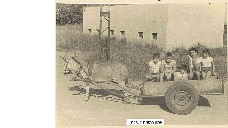 ילדי צופית על עגלה רתומה לחמור