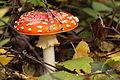 Pilze 2010-09-25-4340.jpg