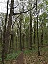 Pioneer Mothers Memorial Forest April 2016.JPG