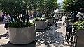 Plantenbakken Den Haag centrum, -klimaatadaptatie (42212712132).jpg