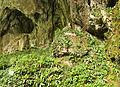 Plants near Škocjan cave.jpg