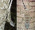 Plica caribeana - ZooKeys-355-049-g007.jpg