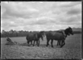 Ploughing, with a team of draught horses, on the Mendip Hills property, Hurunui District. ATLIB 283948.png