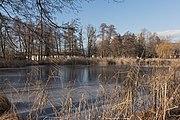 Poertschach Halbinselpromenade Uferzone mit Schilfrohr 21012016 0262.jpg