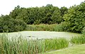 Pond beside Middle Farm house, Newbold Grounds - geograph.org.uk - 1416191.jpg