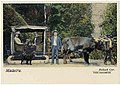Postal. Madeira. Bullock Car.jpg