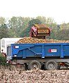 Potato harvest - the trailer is almost full - geograph.org.uk - 1539463.jpg