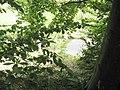Potok - panoramio - geokon60.jpg