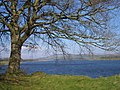 Poulaphouca reservoir - geograph.org.uk - 1773973.jpg