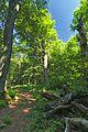 Prírodná rezervácia Borsukov vrch, Národný park Poloniny (10).jpg