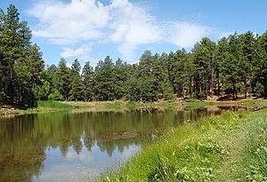 Prescott National Forest - Image: Prescott Natl Forest Nima 5