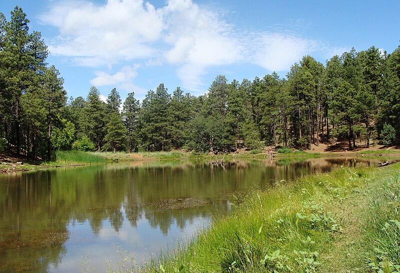 Prescott National Forrest