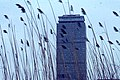 Prudential Tower from the Back Bay Fens, March 1971.jpg