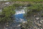 Puddle from melted ice near edge of Firth River above Joe Creek confluence, Ivvavik National Park, YT.jpg