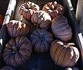 Pumpkin Hayato - 5231.jpg
