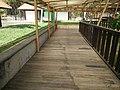Putrajaya Botanical Garden in Malaysia 02.jpg