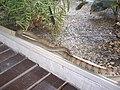 Queen Saovabha Memorial Institute - Snake Farm, Bangkok - panoramio.jpg