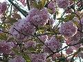 Queens park весной - panoramio.jpg