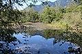 Réserve naturelle Marais Lavours Aignoz Ceyzérieu 119.jpg
