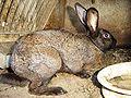 Rabbit DSC00378.JPG