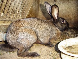 Rabbit DSC00378