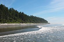 Rain forest along Olympic Coast.jpg