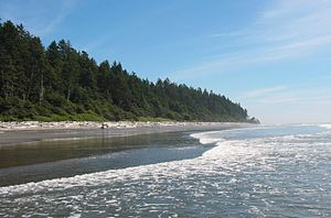 Pacific temperate rainforests (WWF ecoregion) - Temperate rain forests, such as this in Washington's Olympic Peninsula, often grow right up to the shoreline.