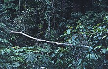 A fallen tree crosses an otherwise dark, lush forest edge near a logging site.