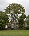 Ravenscourt Park ToH sm MG 8065.jpg