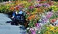 Reading in the garden, (15468717167).jpg