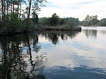 Reflection Goose Creek SP NC 8654.jpg