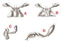 Reitter Panagaeus bodyparts.png