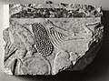 Relief fragment showing an offering table MET 09.180.98.jpeg