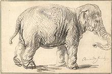 an elephant crackup analysis