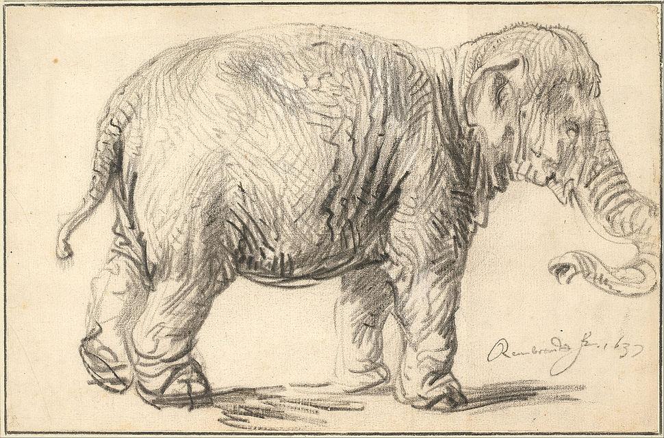 Rembrandt Harmenszoon van Rijn - An Elephant, 1637 - Google Art Project
