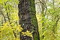 Rezerwat przyrody Morysin, park 9.jpg