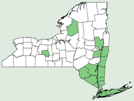Rhododendron viscosum NY-dist-map.png