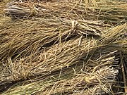 bundles of rice straw