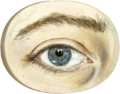 Right eye.png